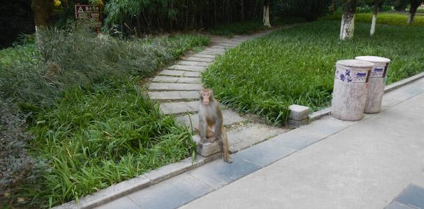 Wilde aapjes in Guilin