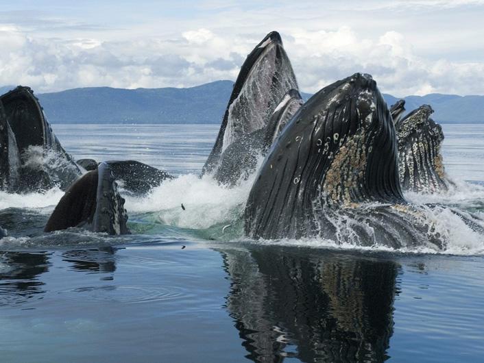 Walvissen spotten rond de Pareleilanden