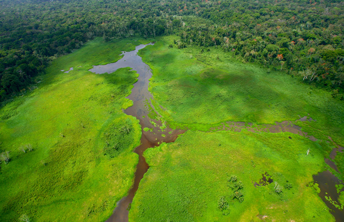Darien regenwoud Panama