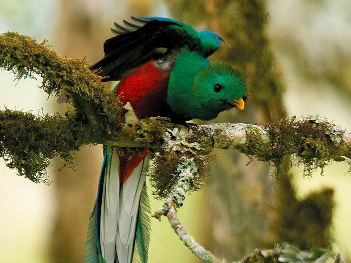 Sendero Los Quetzales wandelpad