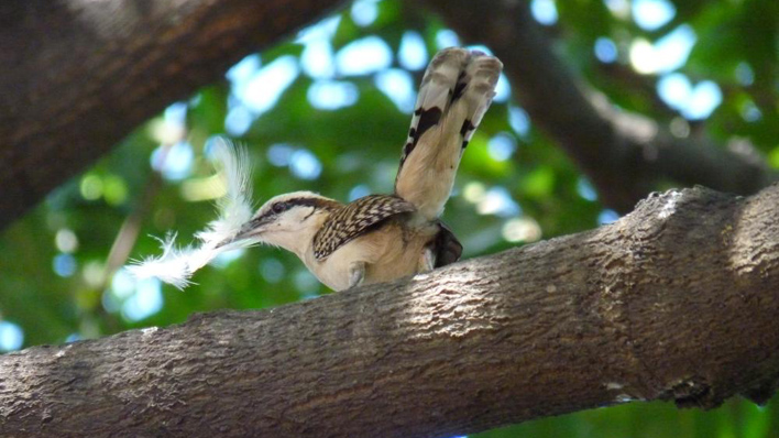 Natuur in Nicaragua