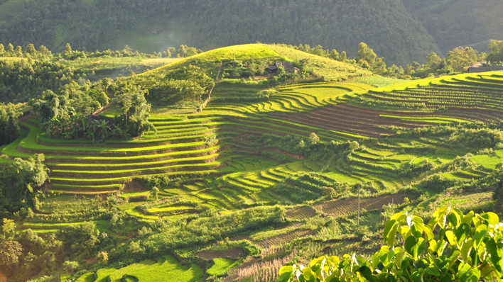 Rijsvelden van Sapa Vietnam