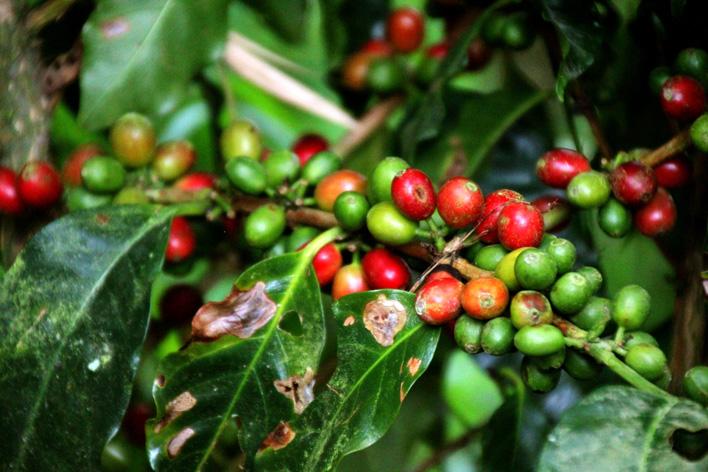 Koffie uit Colombia