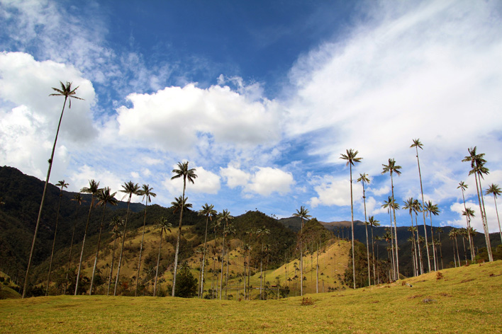 Valle de Cocora palmbomen