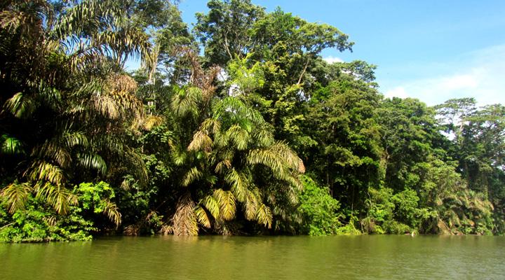 Tortuguero-nationaal-park