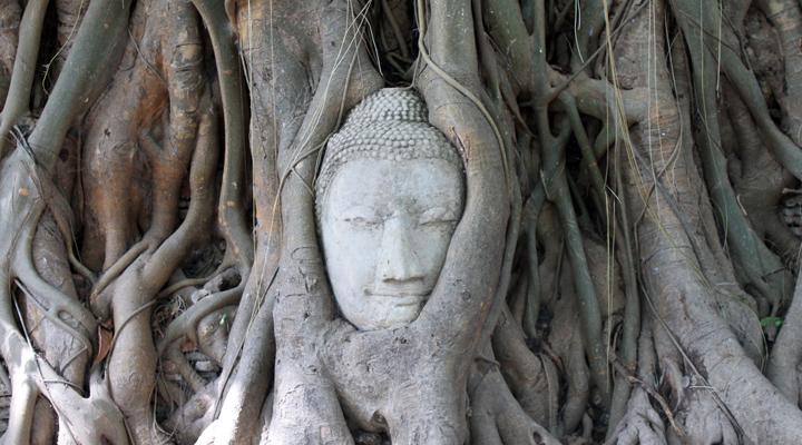 Boeddhabeeld in boom Ayutthaya