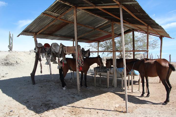 Paardrijden in de Tatacoa woestijn