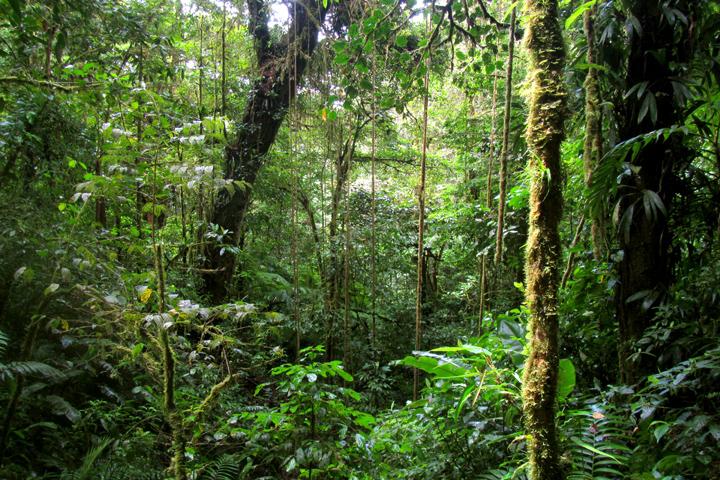 Rincon de la Vieja Nationaal Park
