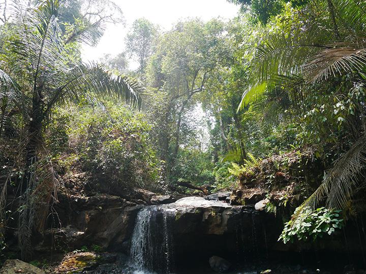 Jungle trekking  Sen Monorom
